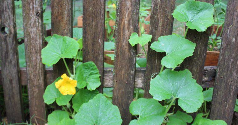 Growing Alongside Your Garden